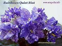 Rainbows Quiet Riot