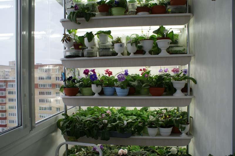 Как разместить лотки с растениями на балконе.