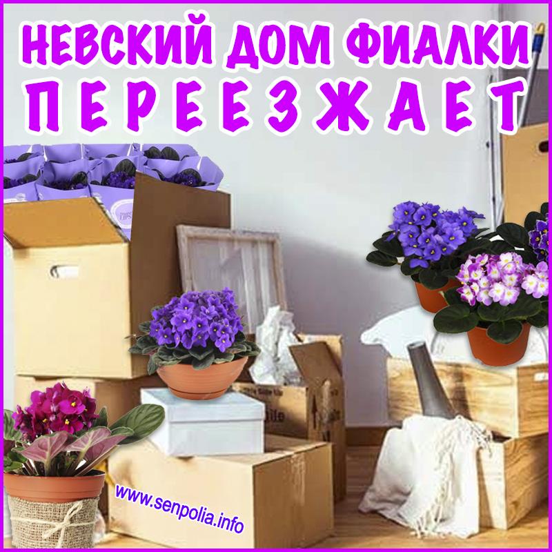 Невский Дом фиалки переезжает на Кронверкский 29