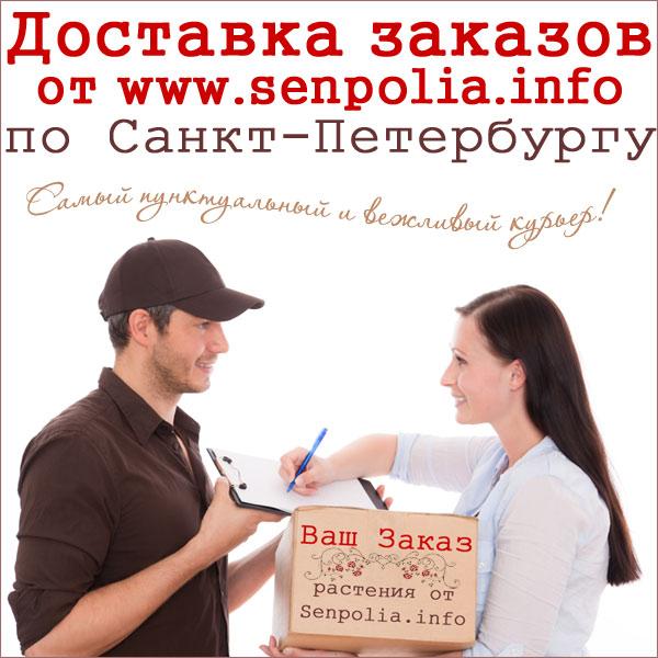 Доставка сенполий по Санкт-Петербургу